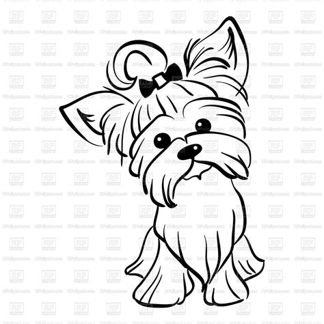 Funny dog Yorkshire terrier breed Vector Image of Plants and Animals